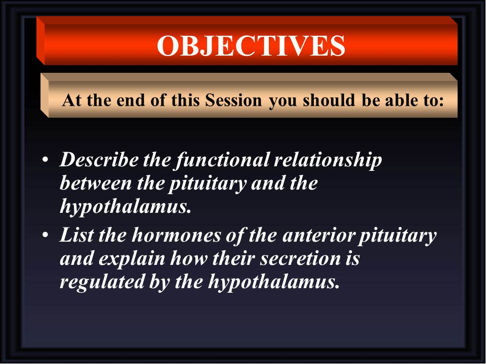 Describe the functional relationship between the pituitary and the hypothalamus.