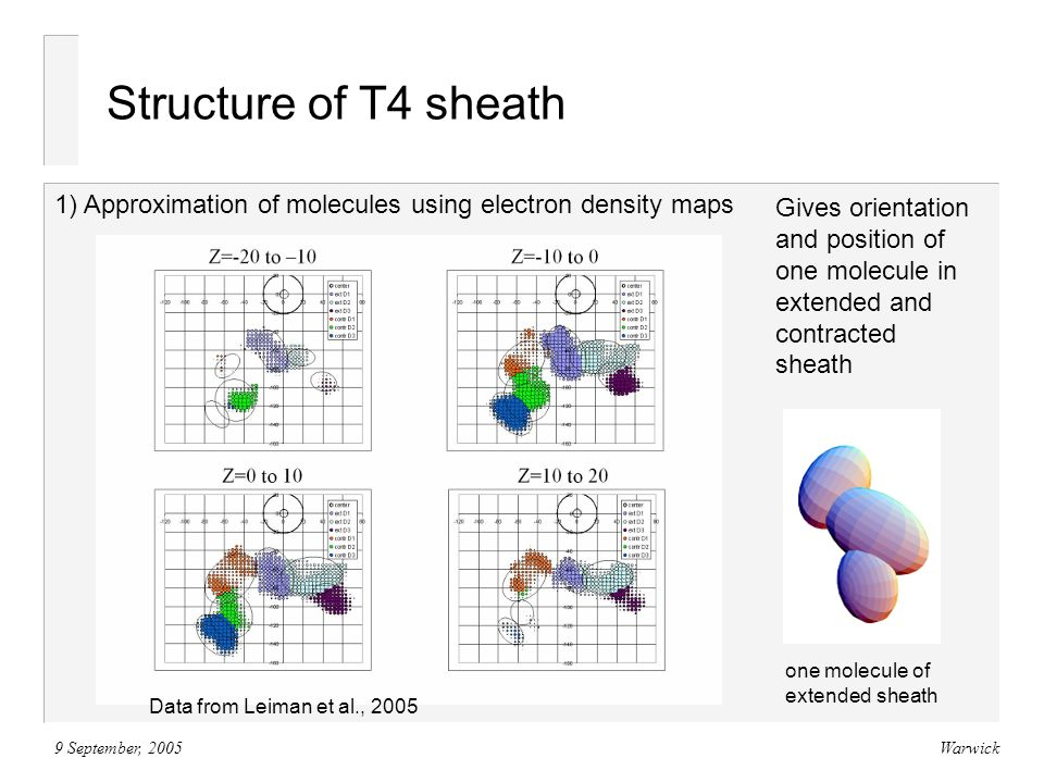 9 September, 2005Warwick Structure of T4 sheath 1) Approximation of molecules using electron density maps Gives orientation and position of one molecule in extended and contracted sheath one molecule of extended sheath Data from Leiman et al., 2005