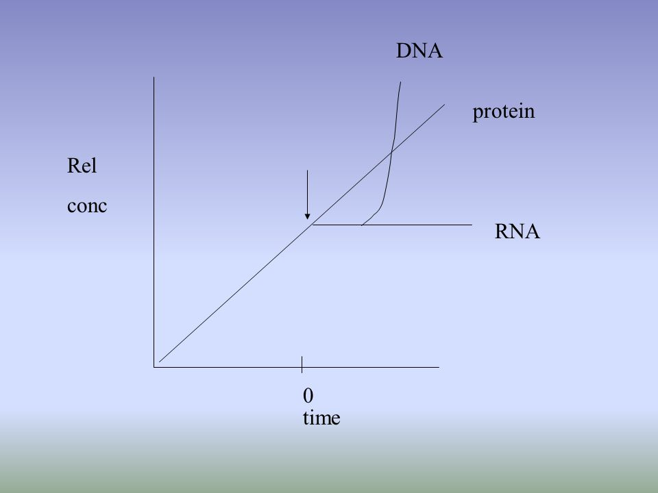 RNA protein DNA Rel conc time 0