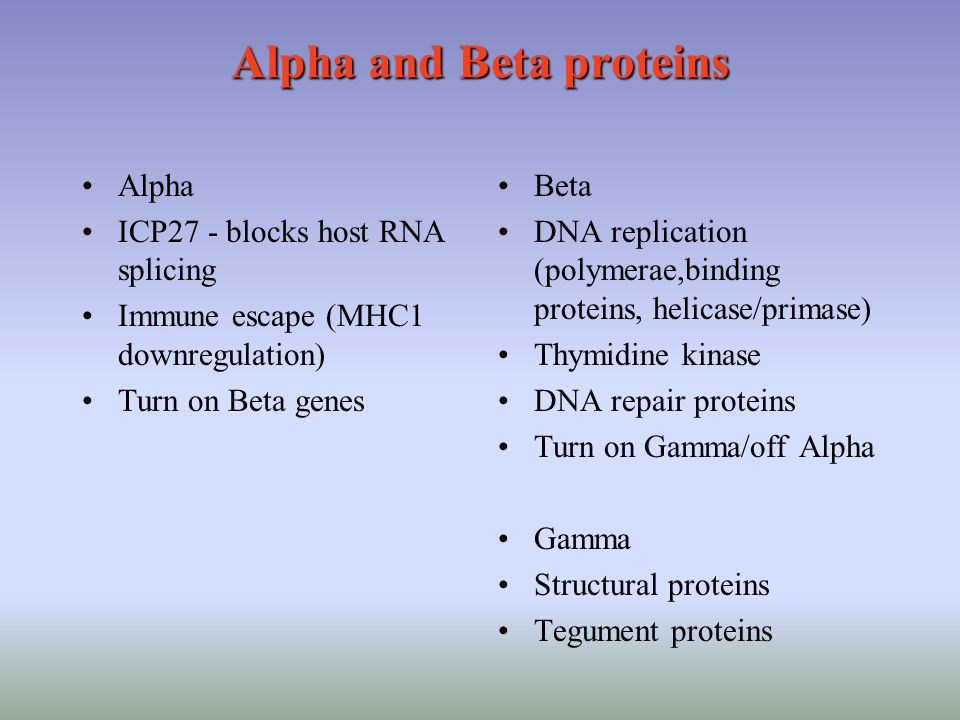 Alpha and Beta proteins Beta DNA replication (polymerae,binding proteins, helicase/primase) Thymidine kinase DNA repair proteins Turn on Gamma/off Alpha Gamma Structural proteins Tegument proteins Alpha ICP27 - blocks host RNA splicing Immune escape (MHC1 downregulation) Turn on Beta genes
