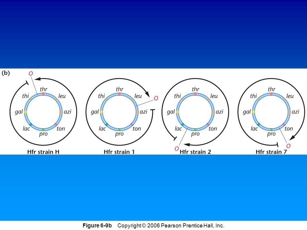 Figure 6-9b Copyright © 2006 Pearson Prentice Hall, Inc.