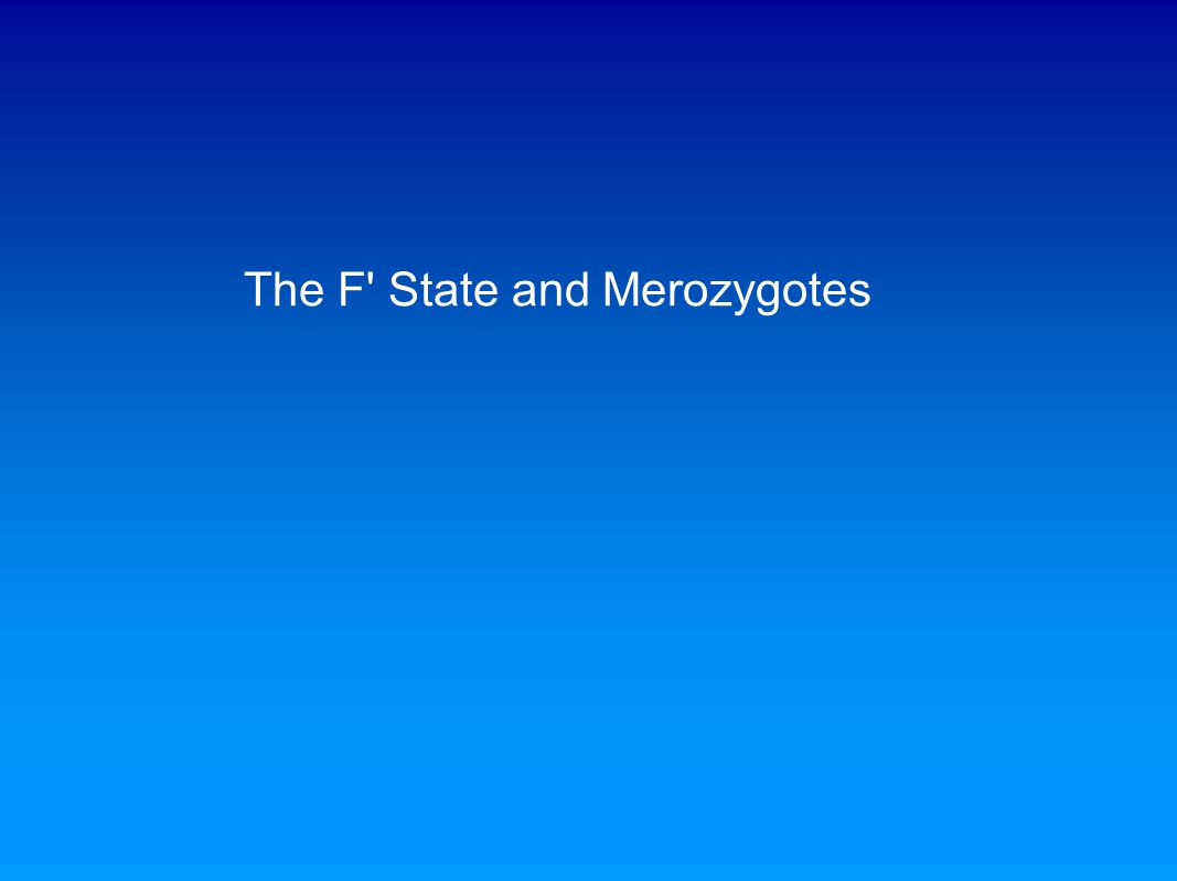 The F' State and Merozygotes