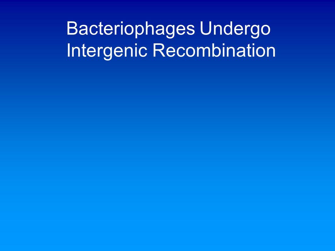 Bacteriophages Undergo Intergenic Recombination