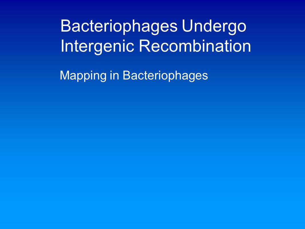 Bacteriophages Undergo Intergenic Recombination Mapping in Bacteriophages