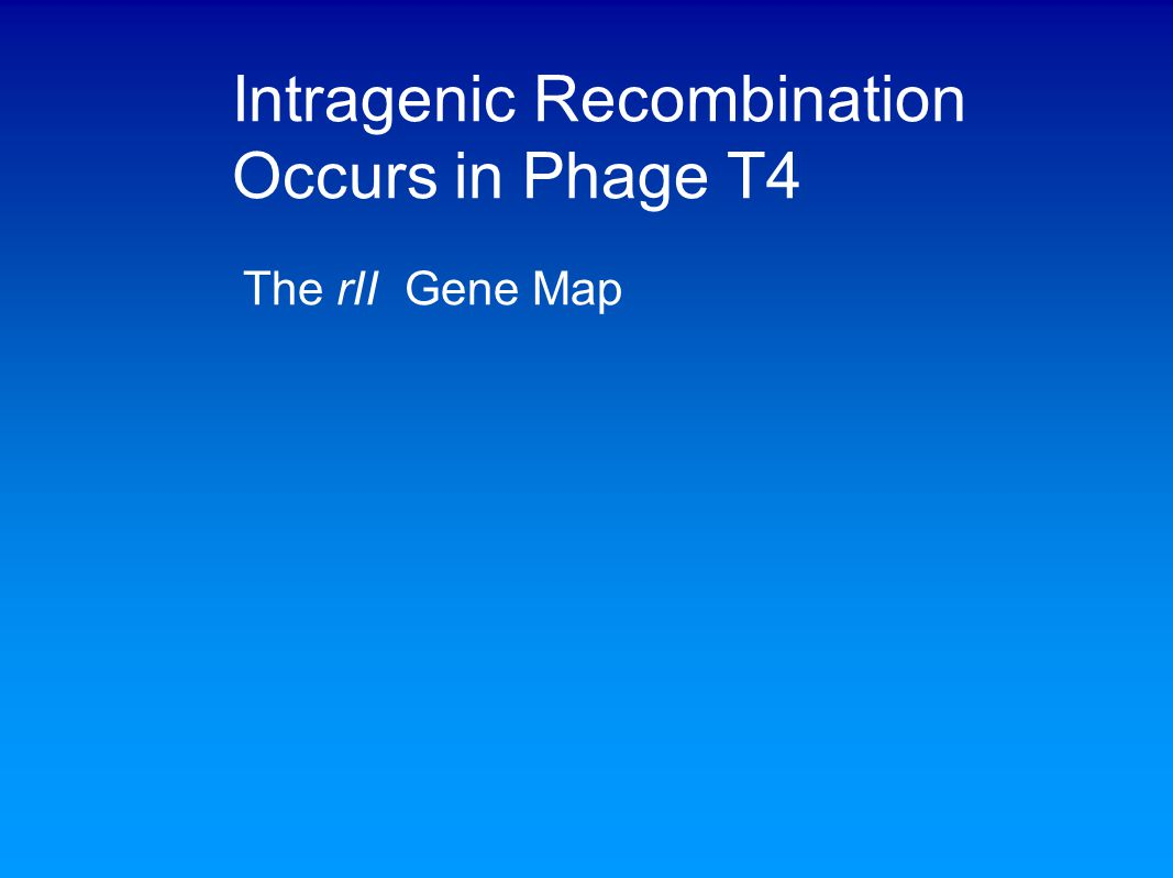 Intragenic Recombination Occurs in Phage T4 The rII Gene Map