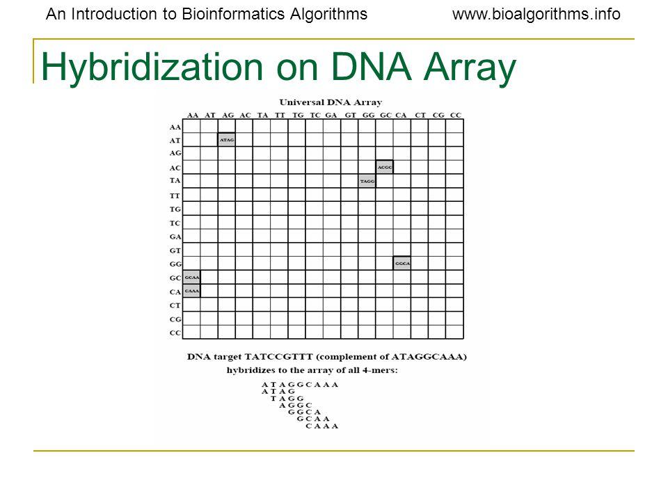 An Introduction to Bioinformatics Algorithmswww.bioalgorithms.info Hybridization on DNA Array