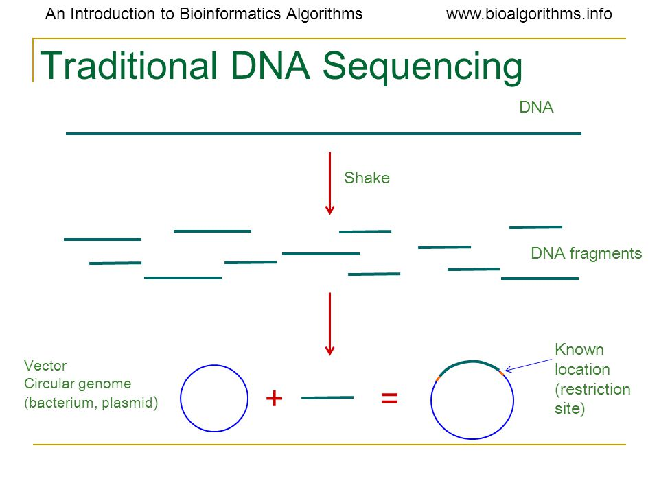 An Introduction to Bioinformatics Algorithmswww.bioalgorithms.info Traditional DNA Sequencing += DNA Shake DNA fragments Vector Circular genome (bacte