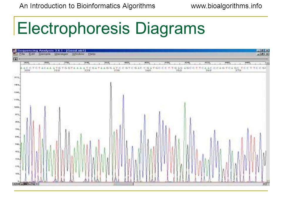 An Introduction to Bioinformatics Algorithmswww.bioalgorithms.info Electrophoresis Diagrams