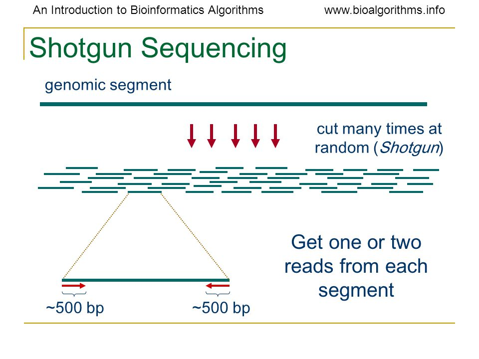 An Introduction to Bioinformatics Algorithmswww.bioalgorithms.info Shotgun Sequencing cut many times at random (Shotgun) genomic segment Get one or two reads from each segment ~500 bp
