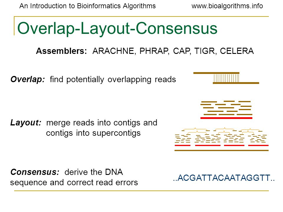 An Introduction to Bioinformatics Algorithmswww.bioalgorithms.info Overlap-Layout-Consensus Assemblers:ARACHNE, PHRAP, CAP, TIGR, CELERA Overlap: find potentially overlapping reads Layout: merge reads into contigs and contigs into supercontigs Consensus: derive the DNA sequence and correct read errors..ACGATTACAATAGGTT..