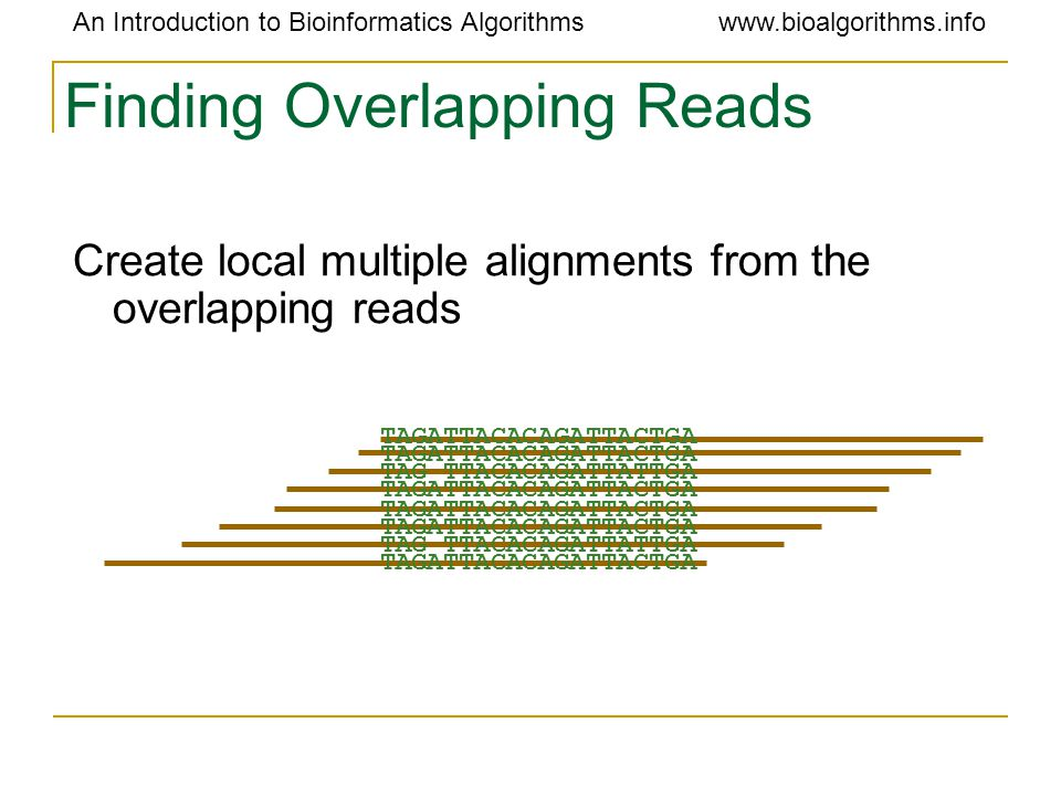 An Introduction to Bioinformatics Algorithmswww.bioalgorithms.info Finding Overlapping Reads Create local multiple alignments from the overlapping rea