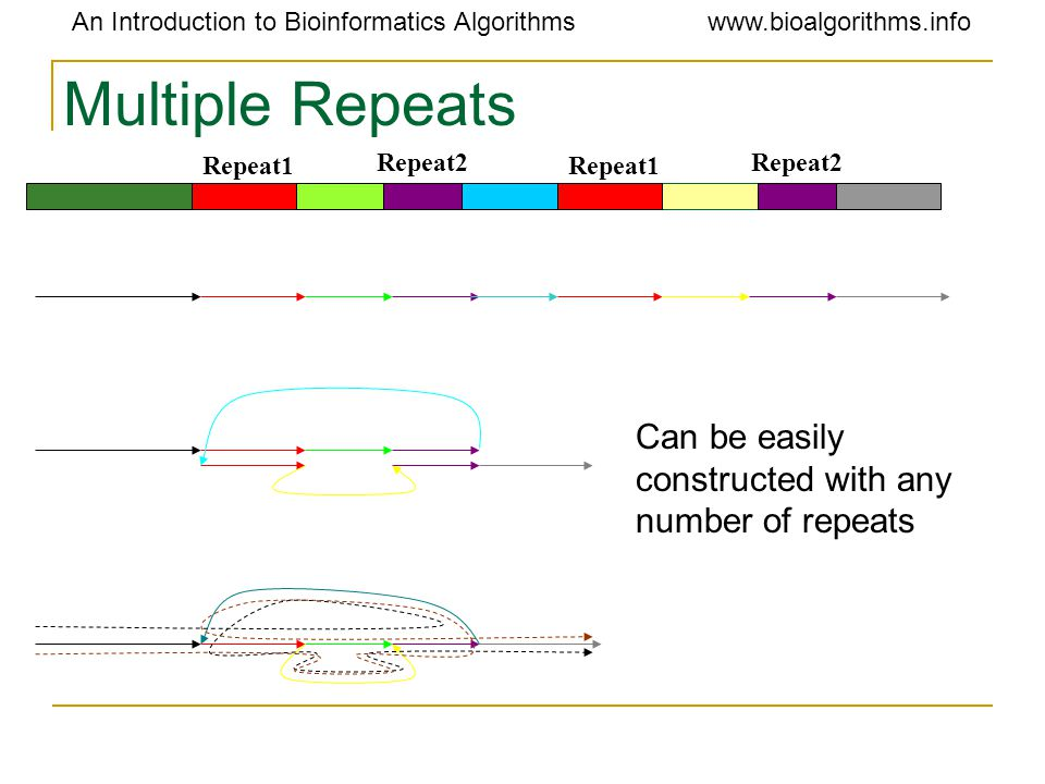 An Introduction to Bioinformatics Algorithmswww.bioalgorithms.info Multiple Repeats Repeat1 Repeat2 Can be easily constructed with any number of repeats