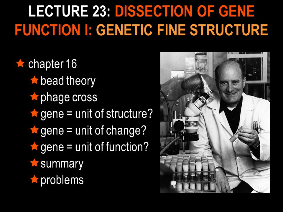 LECTURE 23: DISSECTION OF GENE FUNCTION I: GENETIC FINE STRUCTURE  chapter 16  bead theory  phage cross  gene = unit of structure?  gene = unit o