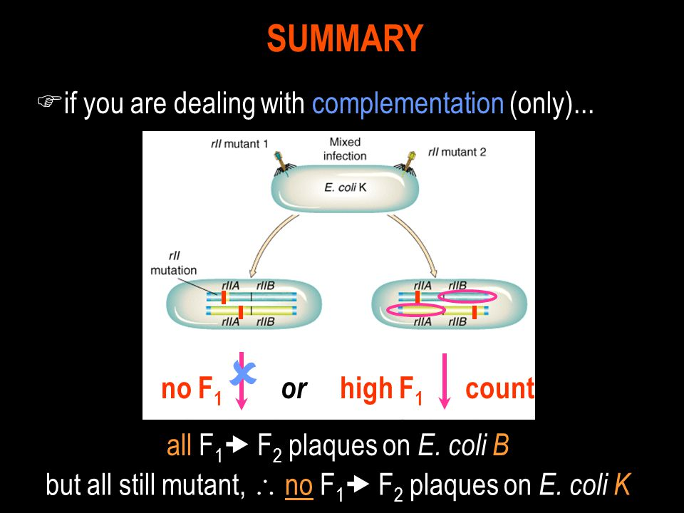 F if you are dealing with complementation (only)... SUMMARY or high F 1 count  no F 1 all F 1  F 2 plaques on E. coli B but all still mutant,  no F