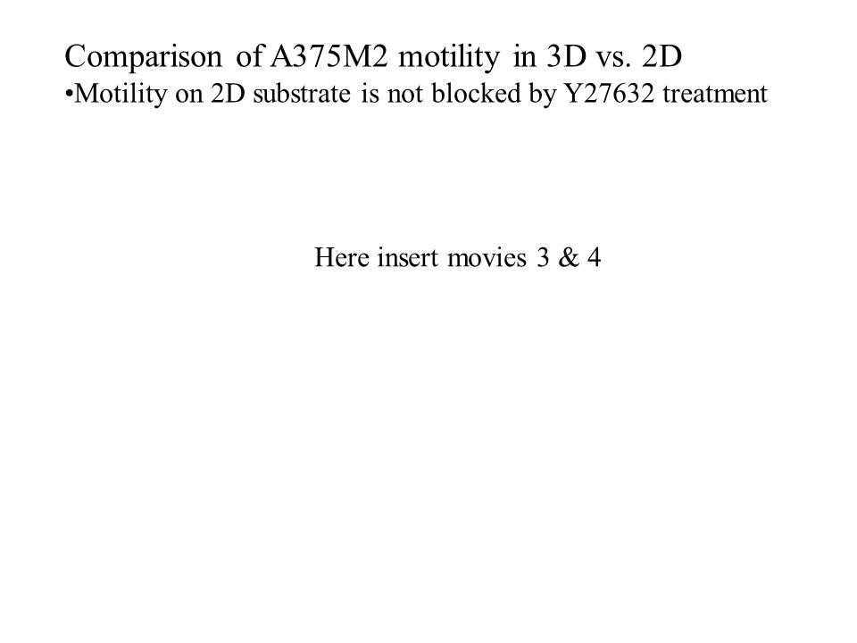 Comparison of A375M2 motility in 3D vs.
