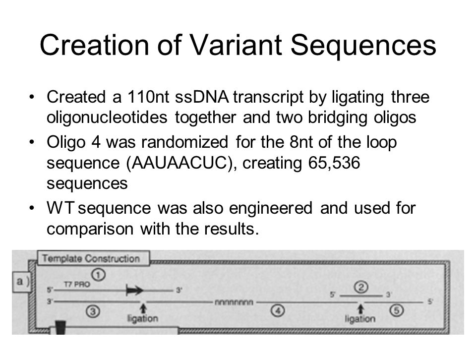Additional binding experiment Sequences were excised from plasmid and filtered as before on nitrocellulose.