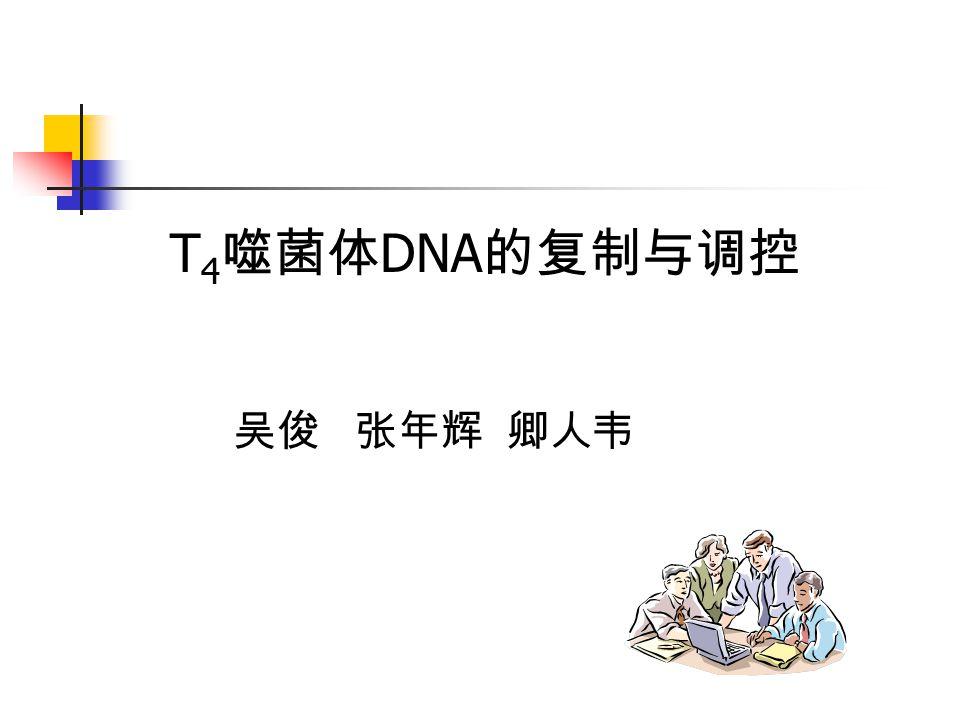 T 4 噬菌体 DNA 的复制与调控 吴俊 张年辉 卿人韦