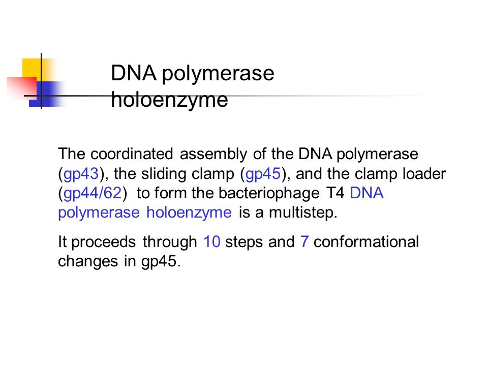 The coordinated assembly of the DNA polymerase (gp43), the sliding clamp (gp45), and the clamp loader (gp44/62) to form the bacteriophage T4 DNA polymerase holoenzyme is a multistep.