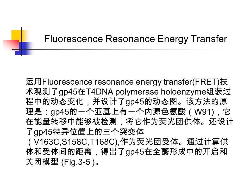 运用 Fluorescence resonance energy transfer(FRET) 技 术观测了 gp45 在 T4DNA polymerase holoenzyme 组装过 程中的动态变化,并设计了 gp45 的动态图。该方法的原 理是: gp45 的一个亚基上有一个内源色氨酸( W91) ,它 在能量转移中能够被检测,将它作为荧光团供体。还设计 了 gp45 特异位置上的三个突变体 ( V163C,S158C,T168C), 作为荧光团受体。通过计算供 体和受体间的距离,得出了 gp45 在全酶形成中的开启和 关闭模型 (Fig.3-5 ) 。 Fluorescence Resonance Energy Transfer