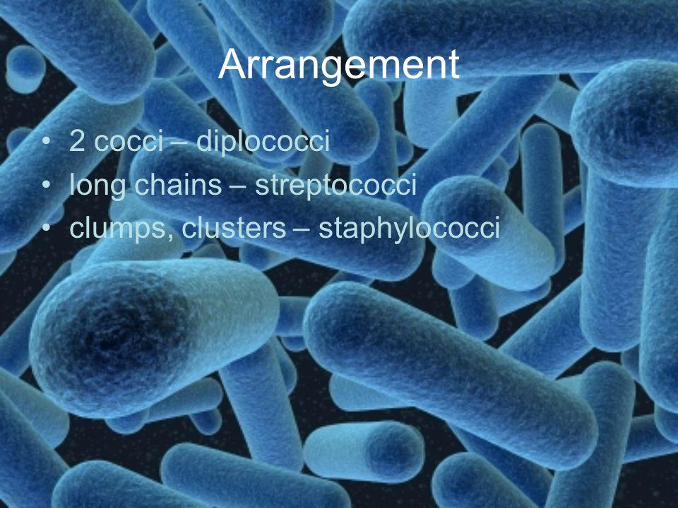 Arrangement 2 cocci – diplococci long chains – streptococci clumps, clusters – staphylococci