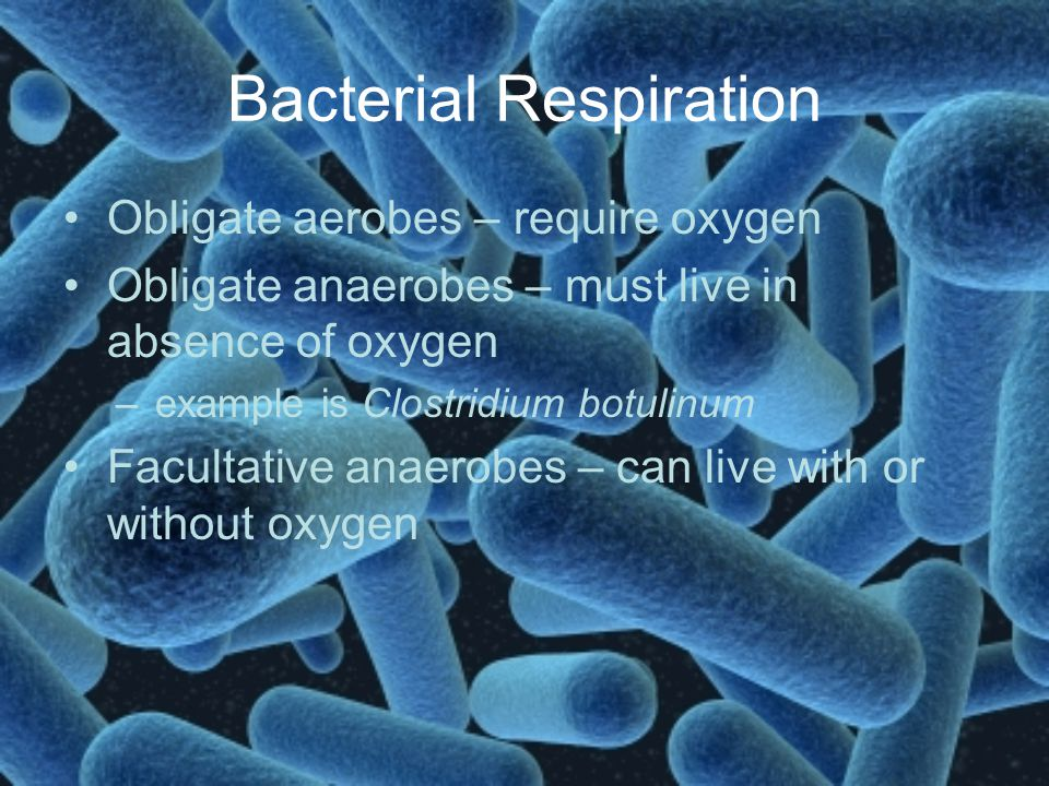 Bacterial Respiration Obligate aerobes – require oxygen Obligate anaerobes – must live in absence of oxygen –example is Clostridium botulinum Facultat