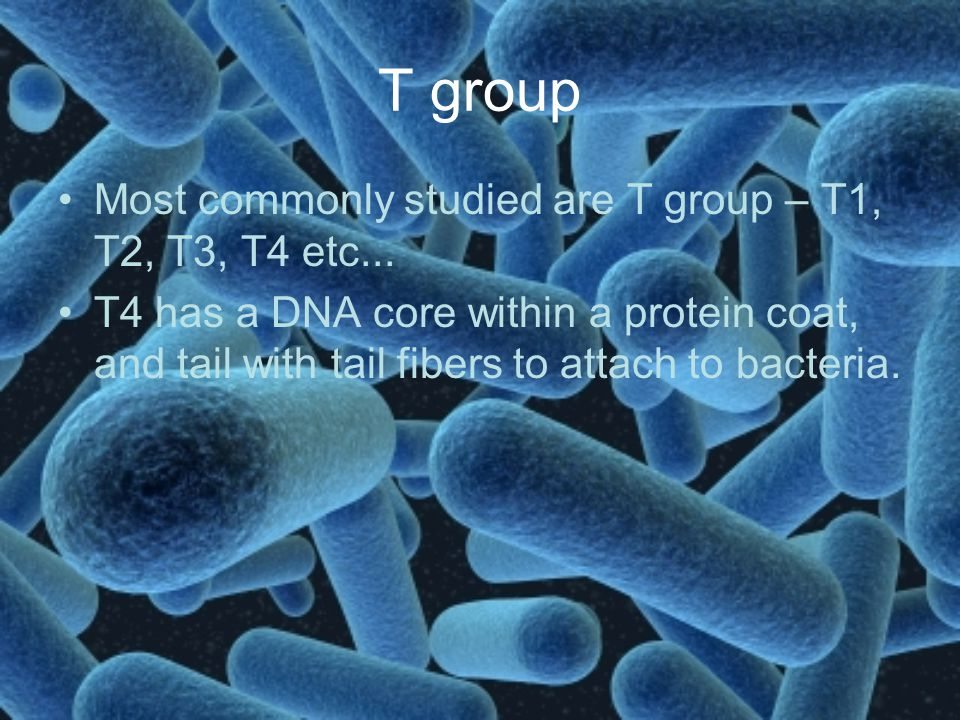 T group Most commonly studied are T group – T1, T2, T3, T4 etc... T4 has a DNA core within a protein coat, and tail with tail fibers to attach to bact