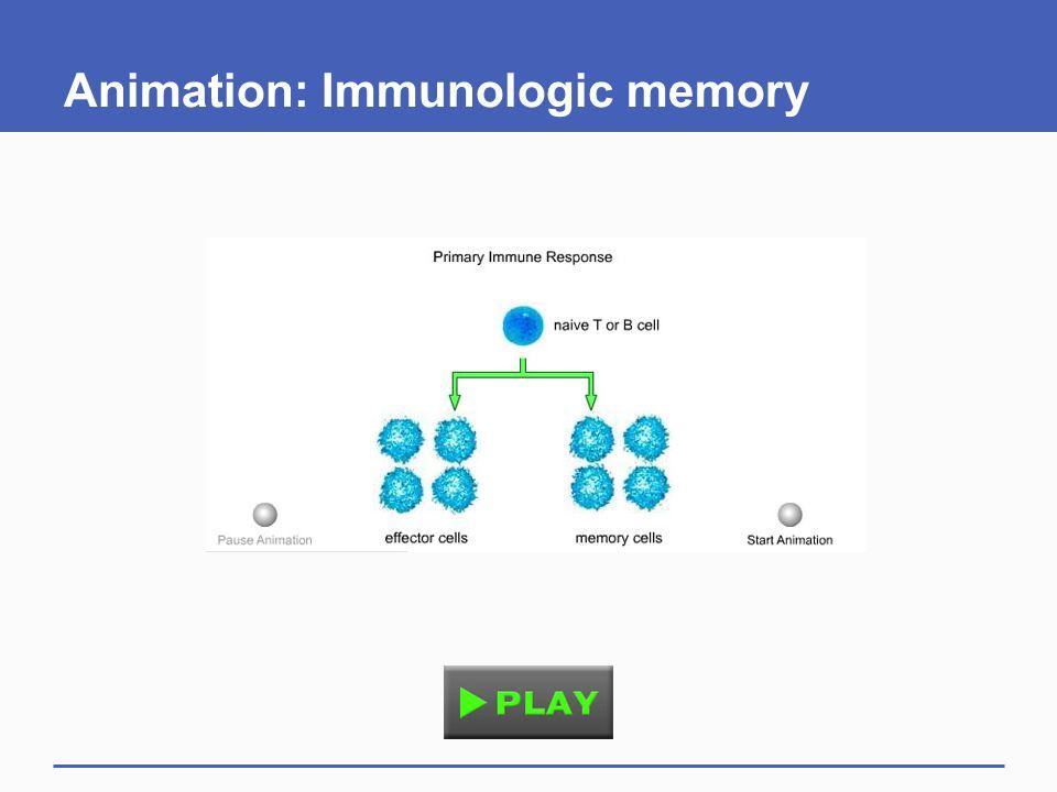 Animation: Immunologic memory