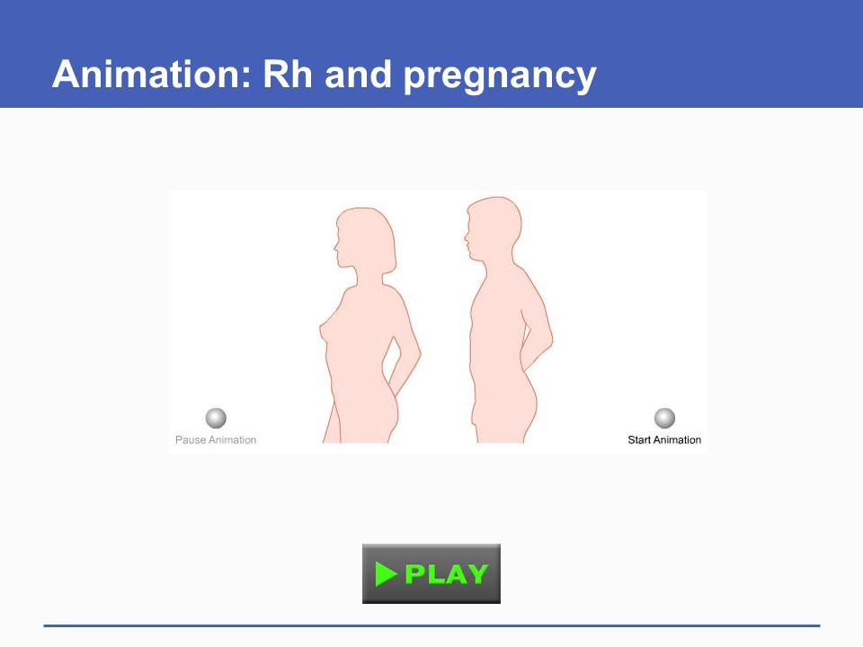 Animation: Rh and pregnancy
