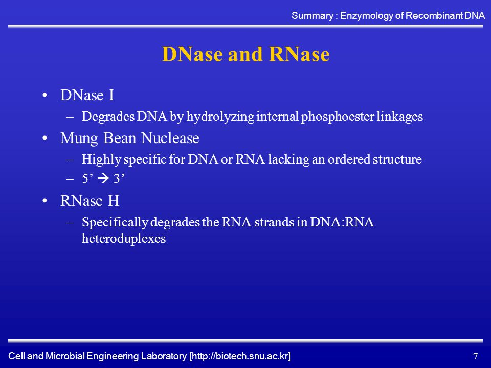 Cell and Microbial Engineering Laboratory [http://biotech.snu.ac.kr] Summary : Enzymology of Recombinant DNA 7 DNase and RNase DNase I –Degrades DNA by hydrolyzing internal phosphoester linkages Mung Bean Nuclease –Highly specific for DNA or RNA lacking an ordered structure –5'  3' RNase H –Specifically degrades the RNA strands in DNA:RNA heteroduplexes