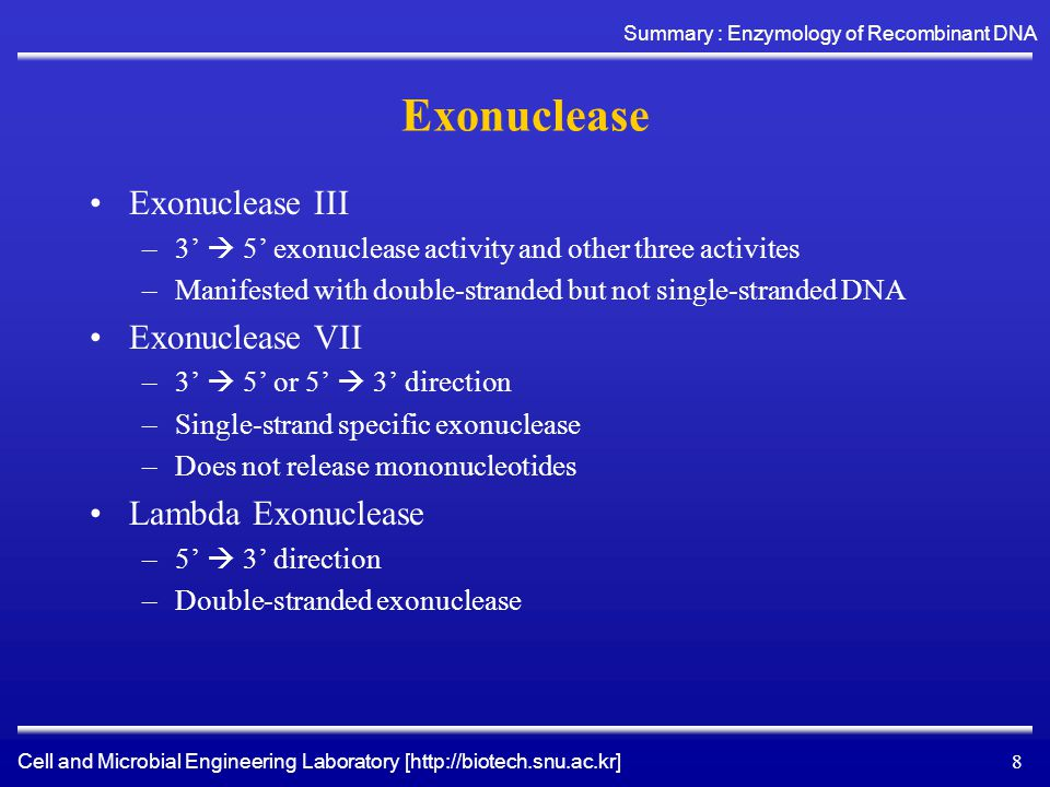 Cell and Microbial Engineering Laboratory [http://biotech.snu.ac.kr] Summary : Enzymology of Recombinant DNA 8 Exonuclease Exonuclease III –3'  5' exonuclease activity and other three activites –Manifested with double-stranded but not single-stranded DNA Exonuclease VII –3'  5' or 5'  3' direction –Single-strand specific exonuclease –Does not release mononucleotides Lambda Exonuclease –5'  3' direction –Double-stranded exonuclease