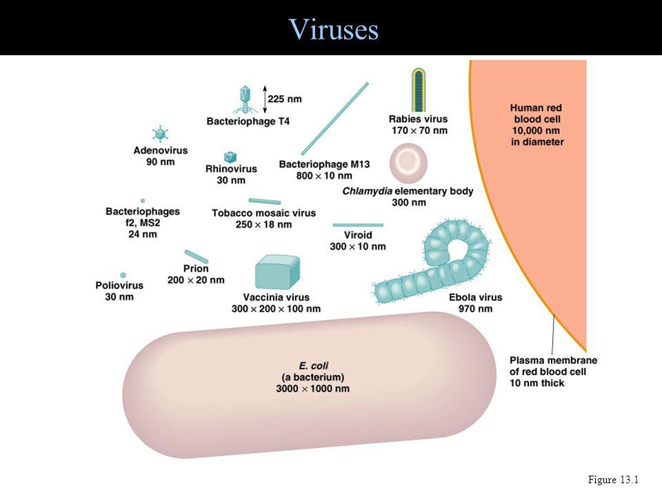 Viruses Figure 13.1