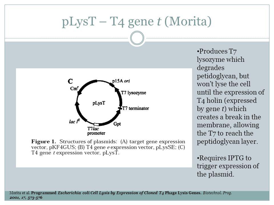 pLysT – T4 gene t (Morita) Morita et al.
