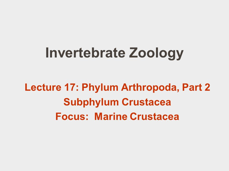 Order Cirripedia: the barnacles Balanus, Semibalanus sp. Chthamalus sp. Pollicipes polymerus