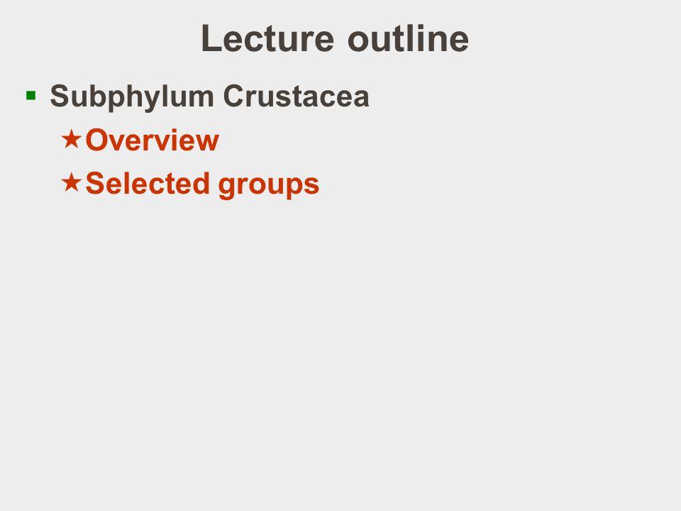 Cirripedia: life cycle http://www.jst.go.jp/erato/project/fck_P/icons/grf1_1.jpg