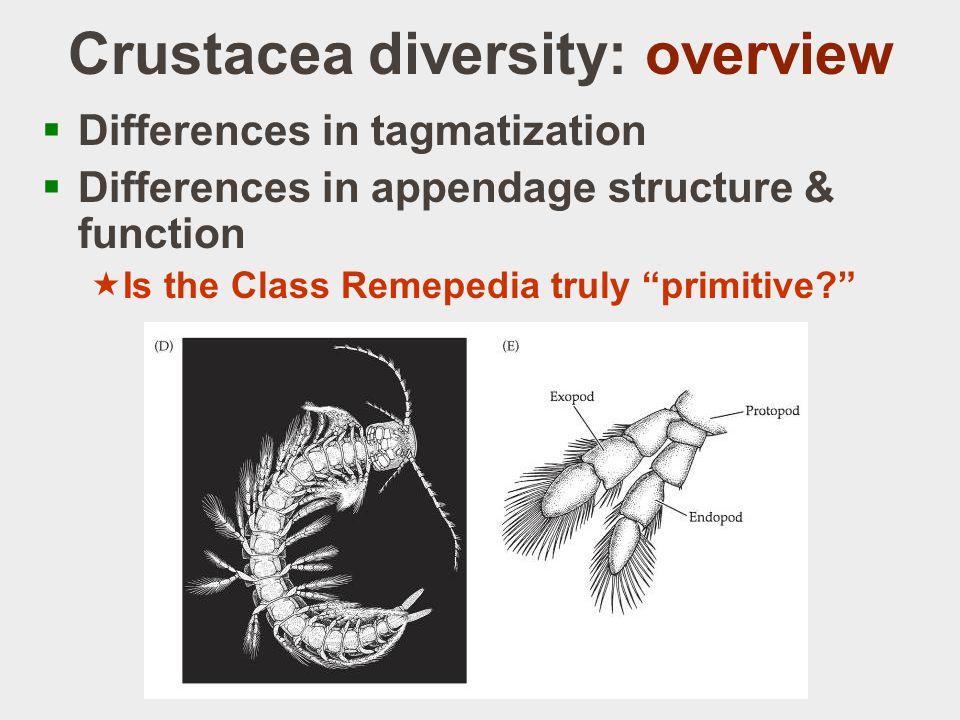 Class Malacostraca  Order Decapoda: Infraorder Anomura  Hermit crabs  Role of reduced T7, T8  Asymmetry  Acquiring shells Students.washington.edu
