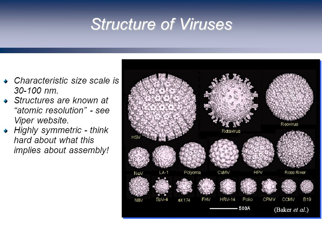 Structure of Viruses (Baker et al.) Characteristic size scale is 30-100 nm.