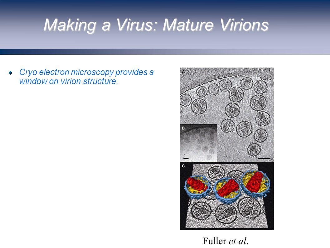 Making a Virus: Mature Virions Fuller et al.