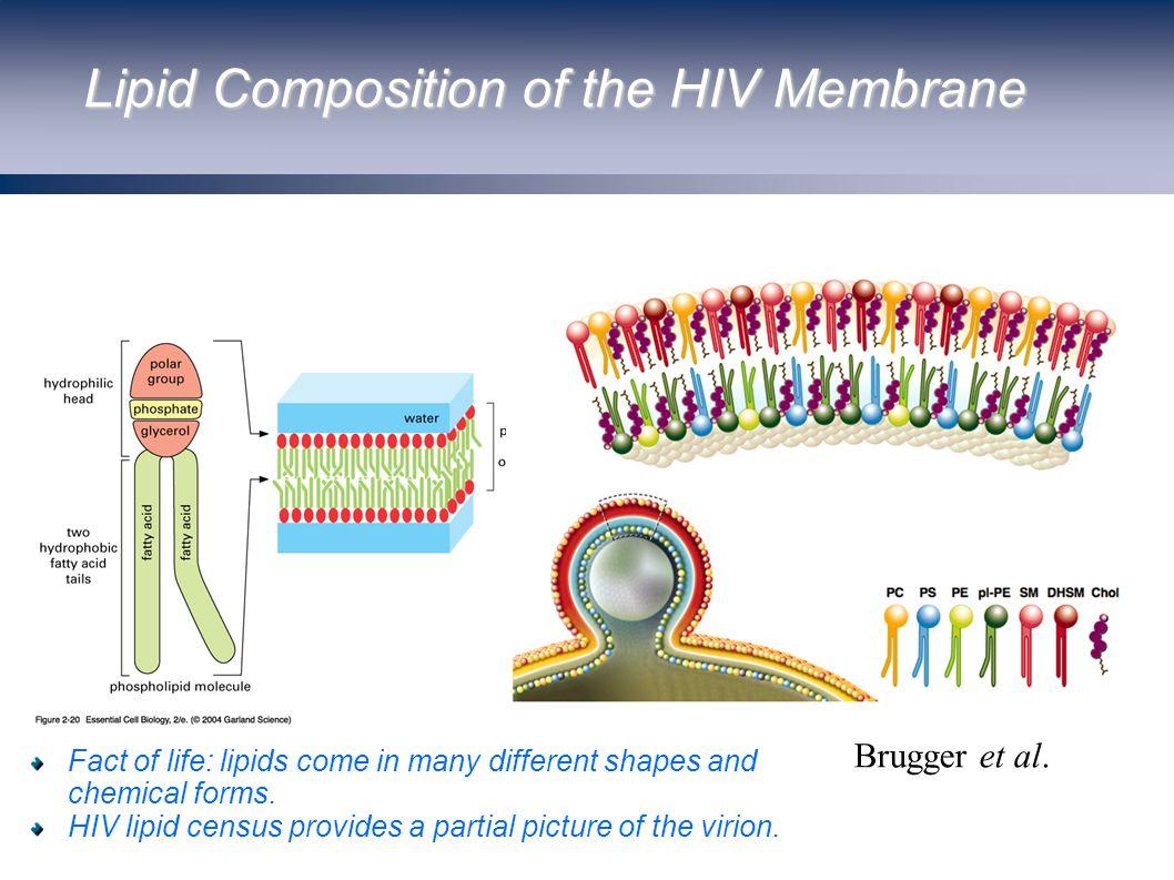 Lipid Composition of the HIV Membrane Brugger et al.