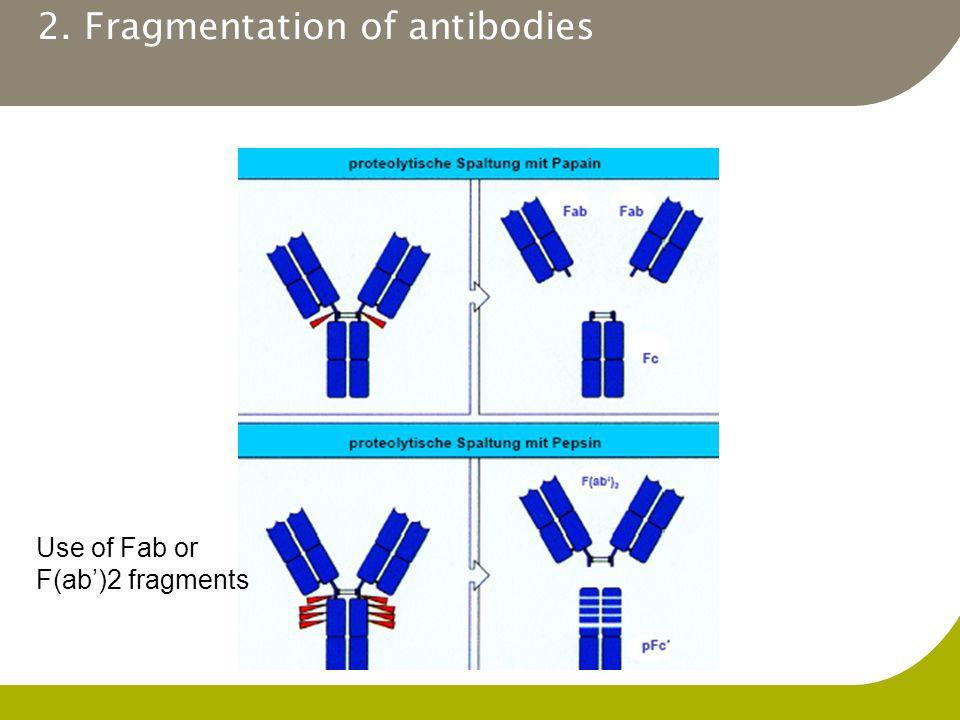 2. Fragmentation of antibodies Use of Fab or F(ab')2 fragments