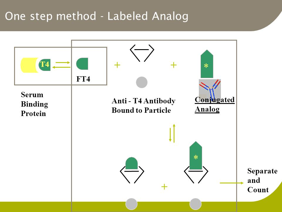 One step method - Labeled Analog Serum Binding Protein T4 FT4 ++ * Anti - T4 Antibody Bound to Particle + * Separate and Count X * Conjugated Analog