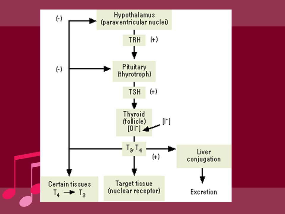Hypothyroidism in pregnancy elevated serum TSH concentration:2.5% of pregnancies In iodine-sufficient environment –Hashimoto's thyroiditis –prior radioactive iodine treatment –surgical ablation of Graves' disease –less common causes: overtreatment of hyperthyroidism with thionamides, transient hypothyroidism owing to postpartum thyroiditis, medications that alter the absorption or metabolism of levothyroxine, and pituitary/hypothalamic disease)