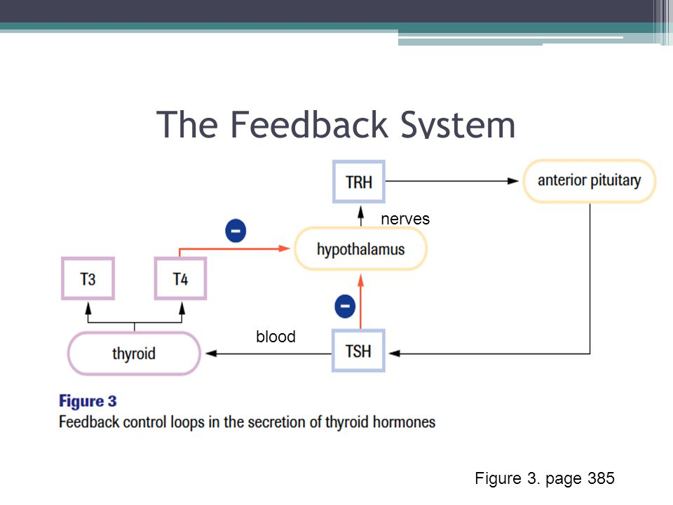 The Feedback System Figure 3. page 385 nerves blood