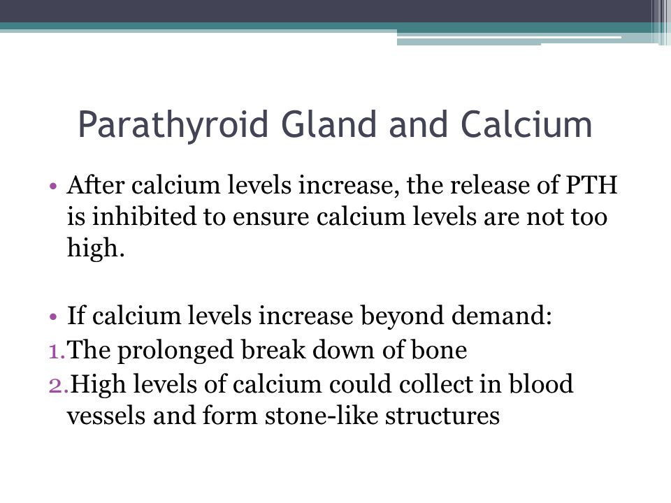 Parathyroid Gland and Calcium After calcium levels increase, the release of PTH is inhibited to ensure calcium levels are not too high.