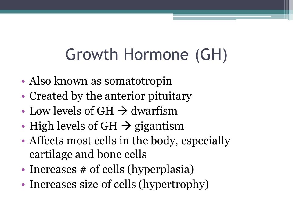 Growth Hormone (GH) Also known as somatotropin Created by the anterior pituitary Low levels of GH  dwarfism High levels of GH  gigantism Affects most cells in the body, especially cartilage and bone cells Increases # of cells (hyperplasia) Increases size of cells (hypertrophy)