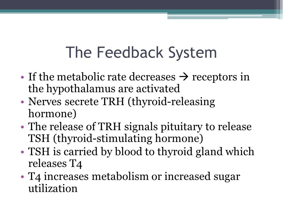 The Feedback System If the metabolic rate decreases  receptors in the hypothalamus are activated Nerves secrete TRH (thyroid-releasing hormone) The release of TRH signals pituitary to release TSH (thyroid-stimulating hormone) TSH is carried by blood to thyroid gland which releases T4 T4 increases metabolism or increased sugar utilization