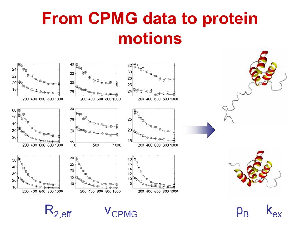 From CPMG data to protein motions R 2,eff ν CPMG p B k ex