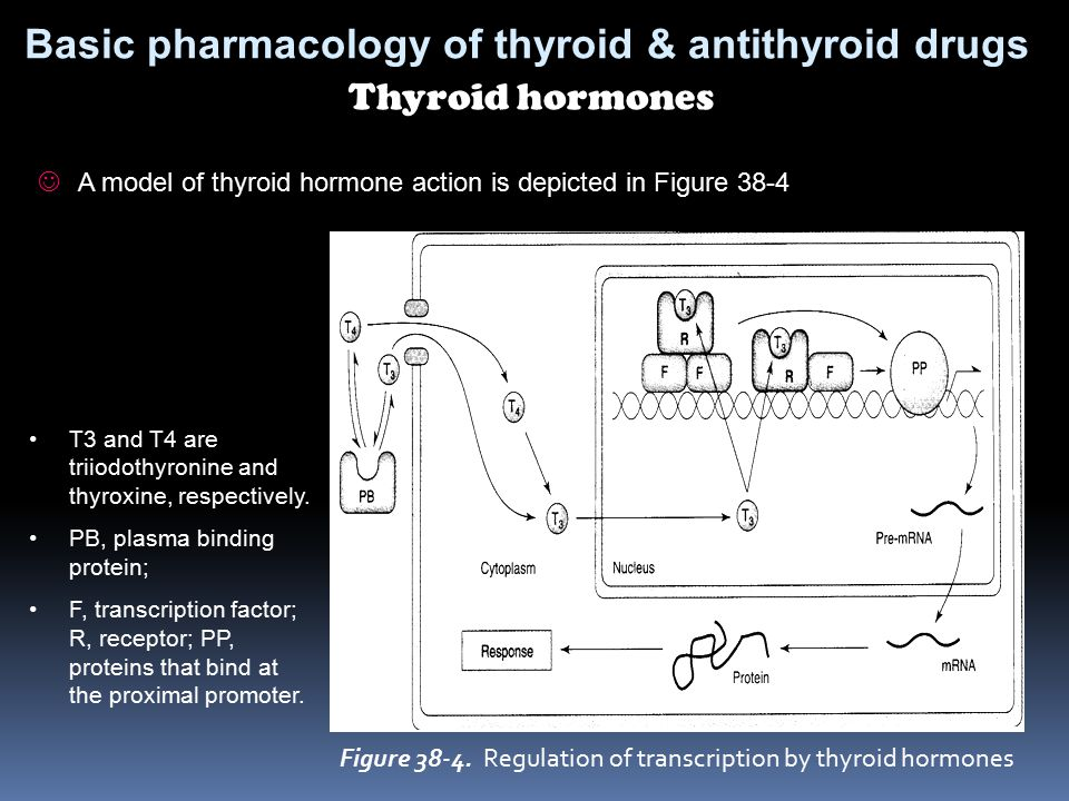 Basic pharmacology of thyroid & antithyroid drugs Thyroid hormones A model of thyroid hormone action is depicted in Figure 38-4 Figure 38-4. Regulatio