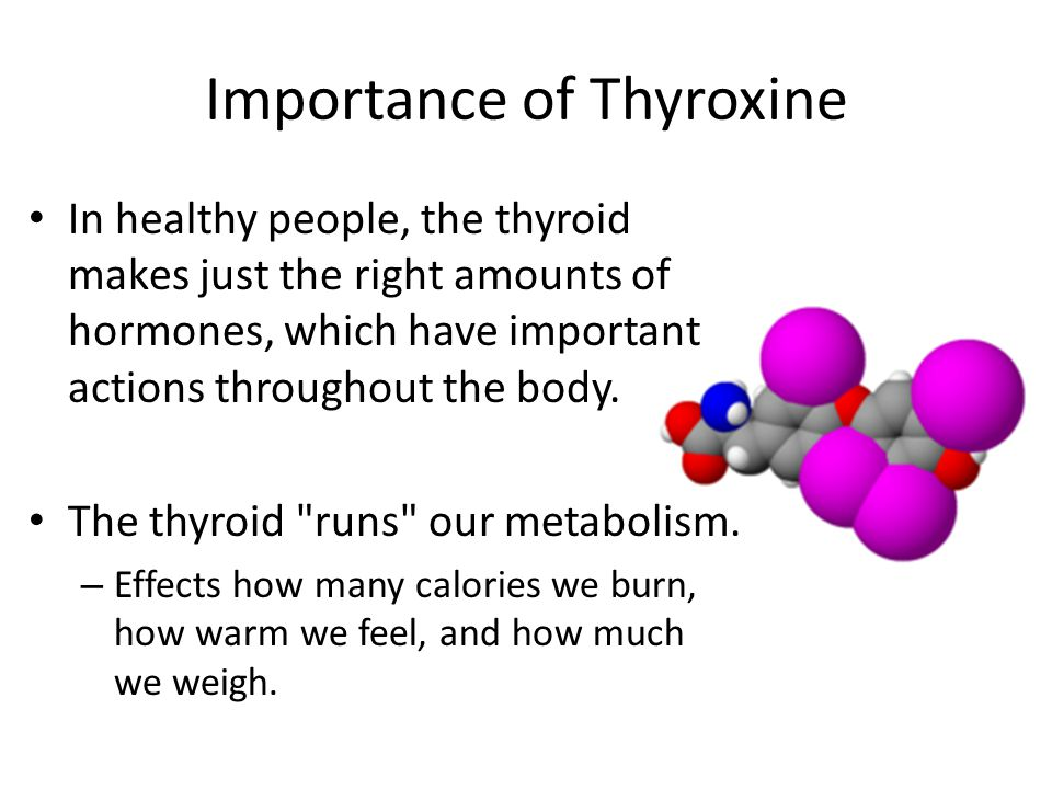 Importance of Thyroxine In healthy people, the thyroid makes just the right amounts of hormones, which have important actions throughout the body.