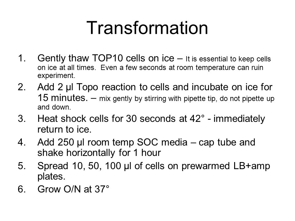 Transformation 1.Gently thaw TOP10 cells on ice – It is essential to keep cells on ice at all times. Even a few seconds at room temperature can ruin e