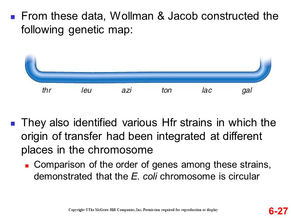 6-27 From these data, Wollman & Jacob constructed the following genetic map: They also identified various Hfr strains in which the origin of transfer had been integrated at different places in the chromosome Comparison of the order of genes among these strains, demonstrated that the E.